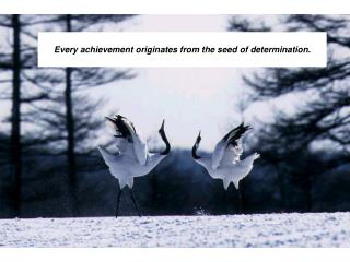 Every achievement originates from the seed of determination.