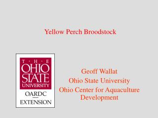 Yellow Perch Broodstock