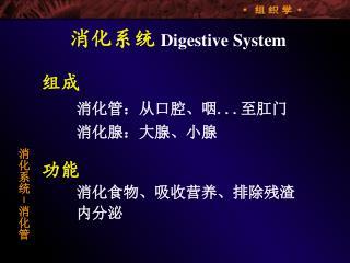 消化系统 Digestive System