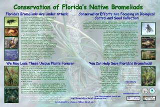 Conservation of Florida s Native Bromeliads