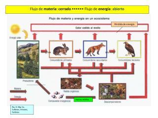 La energía en el ecosistema Flujo de materia y energía en el ecosistema (I)