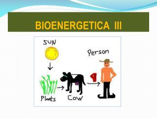 BIOENERGETICA  III