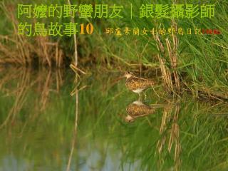 阿嬤的野蠻朋友|銀髮攝影師的鳥故事 10 邱盧素蘭女士的野鳥日記 FEB06