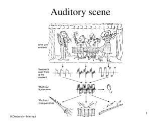 Auditory scene