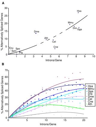 Introns/Gene