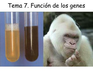 Tema 7. Función de los genes