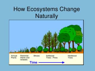 How Ecosystems Change Naturally