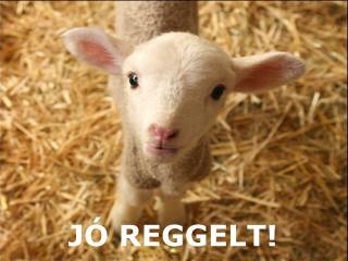 J� REGGELT!