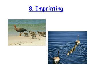 8. Imprinting