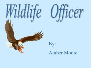 Wildlife   Officer