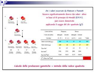 Il  chi quadro  indica la misura in cui le  frequenze osservate in ogni casella della