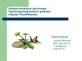 Лекарственные растения  Тракторозаводского района  города Челябинска.