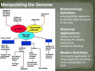 Biotechnology Definition : manipulating organisms to provide useful products or services