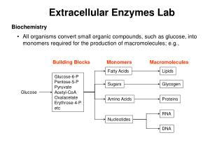 Extracellular Enzymes Lab