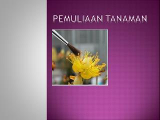 Pemuliaan Tanaman