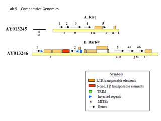 Lab 5 � Comparative Genomics