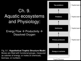 Ch. 9. Aquatic ecosystems and Physiology: Energy Flow   Productivity  Dissolved Oxygen