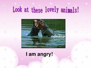 I am angry!