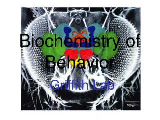 Biochemistry of Behavior Griffith Lab