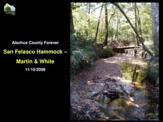 Alachua County Forever San Felasco Hammock –  Martin & White 11/10/2009
