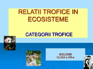 RELATII TROFICE IN ECOSISTEME CATEGORII TROFICE