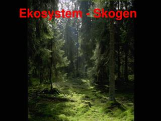 Ekosystem - Skogen