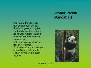 Großer Panda (Pandabär)