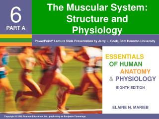 The Muscular System: Structure and Physiology