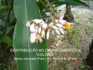 CONTRIBUI  O AO CONHECIMENTO DA  COL NIA   Alpinia zerumbet Pers. B.L. Burtt  R. M. Sm.