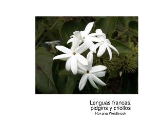 Lenguas francas, pidgins y criollos Roxana Westbrook