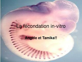 La f�condation in-vitro