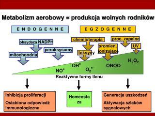 Metabolizm aerobowy = produkcja wolnych rodników