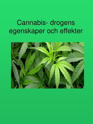 Cannabis- drogens egenskaper och effekter