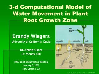3-d Computational Model of Water Movement in Plant Root Growth Zone