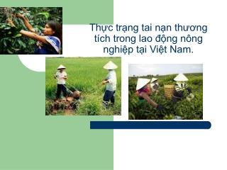 Thực trạng tai nạn thương tích trong lao động nông nghiệp tại Việt Nam.