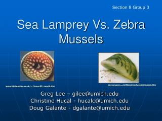 Sea Lamprey Vs. Zebra Mussels