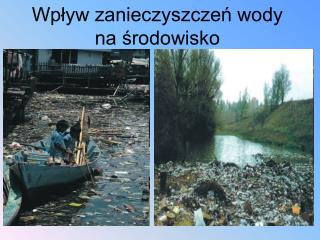 Wp?yw zanieczyszcze? wody na ?rodowisko