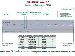 Selection of BACs (IV) Assembly of BAC ends on P250I21