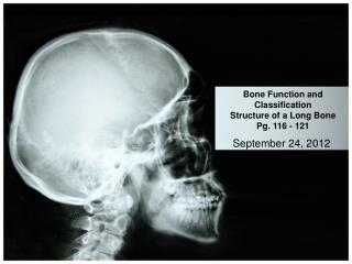 Bone Function and Classification Structure of a Long Bone Pg. 116 - 121