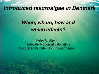 Introduced macroalgae in Denmark