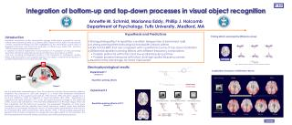 Integration of bottom-up and top-down processes in visual object recognition
