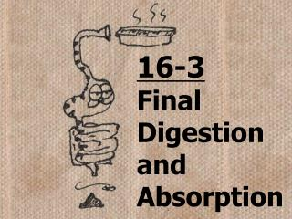 16-3 Final Digestion and Absorption