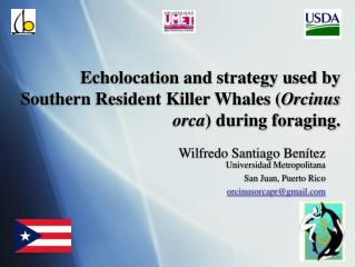 Echolocation and strategy used by Southern Resident Killer Whales Orcinus orca during foraging.