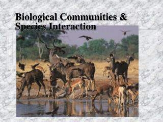 Biological Communities & Species Interaction