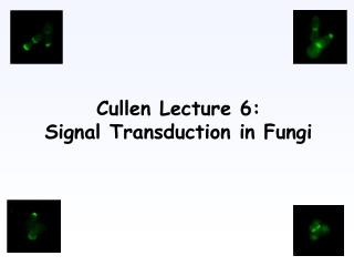 Cullen Lecture 6: Signal Transduction in Fungi