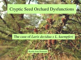 Cryptic Seed Orchard Dysfunctions