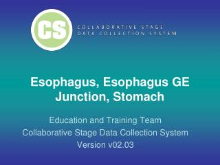 Esophagus, Esophagus GE Junction, Stomach