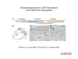 WC Warren  et al. Nature 464 , 757-762 (2010) doi:10.1038/nature08819