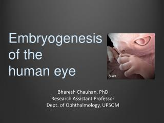 Bharesh  Chauhan, PhD Research Assistant Professor Dept. of Ophthalmology, UPSOM