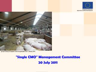 """ Single CMO ""  Management Committee 20 July 2011"